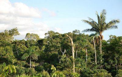 南米熱帯雨林の写真