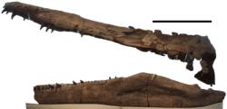 プリオサウルスの写真