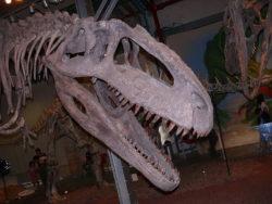 ギガノトサウルス骨格標本の写真