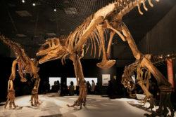 マプサウルスの写真