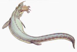 モササウルスの写真