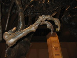 ティラノサウルスの前橋の化石標本の写真