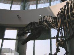 アクロカウントサウルスの写真