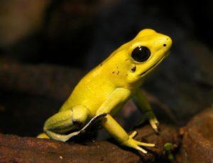 モウドクフキヤガエルの写真