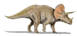 トリケラトプスの写真