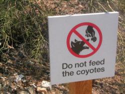 コヨーテ餌付け禁止の看板の写真