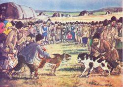 闘犬の写真