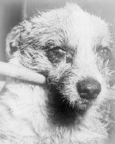 狂犬病の写真