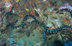 ウミヘビの写真