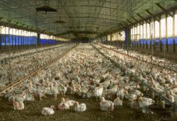 養鶏所の写真