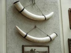 象牙の写真