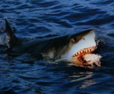 サメの写真