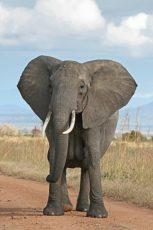 ゾウの写真