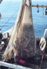 漁の網の写真