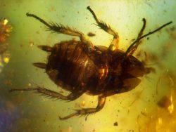 ゴキブリの写真