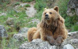 クマの写真