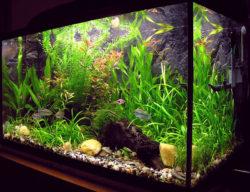 熱帯魚の写真