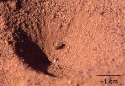 アリジゴクの巣の写真