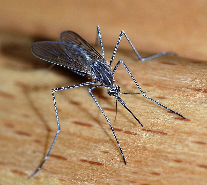 やすい 特徴 人 に 蚊 刺され の