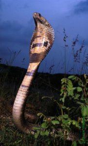 ヘビの写真