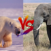 熊vs象!どっちが強い!?