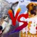 狼と犬の違いとは?どっちが強いの?