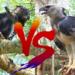 鷹と鷲どっちが強い?違いと見分け方