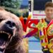 熊 vs 人間!素手で戦ったらプロの格闘家なら勝てる?