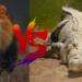 ライオン対ワニ!どっちが強い!?