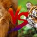 ライオンとトラどっちが強い?実は交配でできるライガーが最強説!